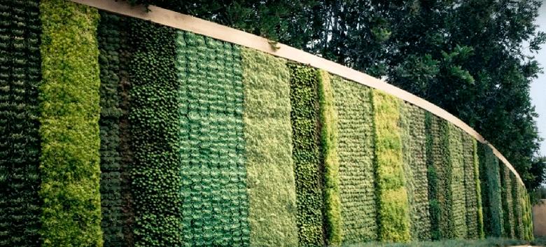 Foto de parede verde